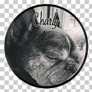 French Bulldog Puppy Dog Breed Non-sporting Group PNG