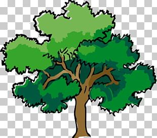 Narra Tree Oak PNG