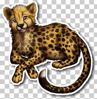 Cheetah Leopard Cat Drawing PNG