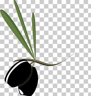 Olive Branch Petition Mediterranean Cuisine Greek Cuisine Olive Oil PNG
