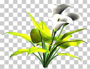 Cut Flowers Plant Stem Leaf Flowering Plant PNG