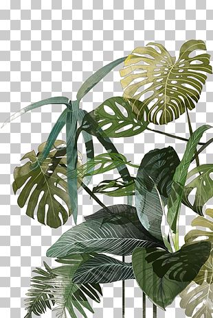 Botanical Illustration Drawing Watercolor Painting Tropics Illustration PNG
