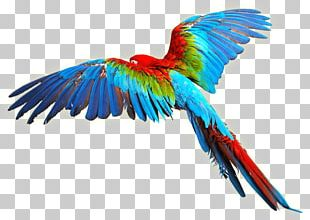 Parrot Bird Scarlet Macaw PNG