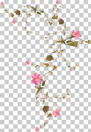 Flower Vine PNG