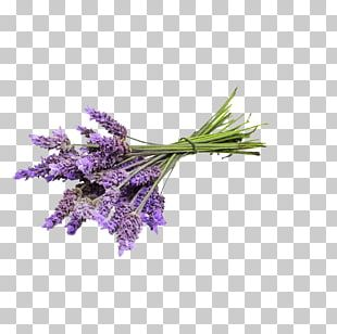 English Lavender Essential Oil Lavender Oil Young Living PNG