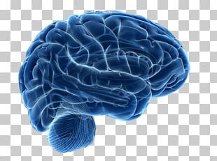 Human Brain Neuroimaging Neuroscience Therapy PNG