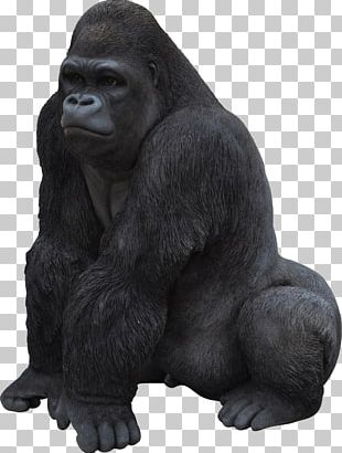 Gorilla Icon PNG