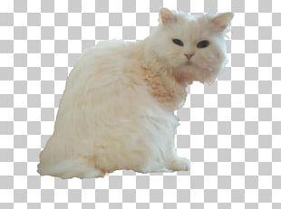 Persian Cat British Semi-longhair Asian Semi-longhair Whiskers Minuet Cat PNG