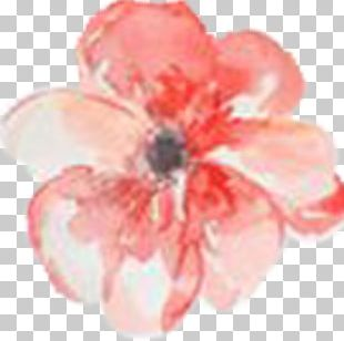 Watercolor Painting Watercolor: Flowers Floral Design PNG