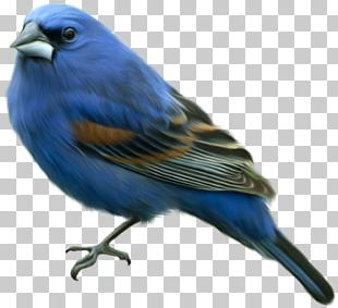 Domestic Canary Eastern Bluebird Finches Reptile PNG