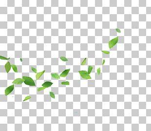 Leaf Gratis Wind PNG
