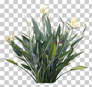 Strelitzia Reginae Plants And Their Names Flower PNG