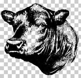 Angus Cattle Kereman Cattle Beef Cattle Calf Steak PNG