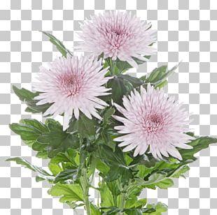 Chrysanthemum Tulip Flower Transvaal Daisy Garden Roses PNG