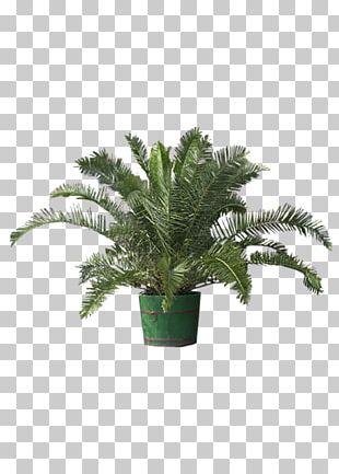 Plant Tree Bonsai Flower Greening PNG