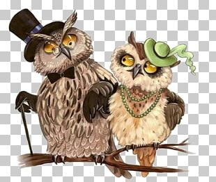 Tawny Owl Bird Drawing Little Owl PNG