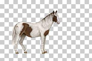 Standing Horse Pixel PNG