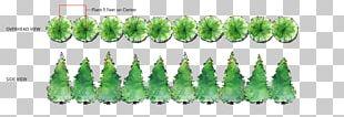 Evergreen Western Redcedar Arborvitae Tree PNG