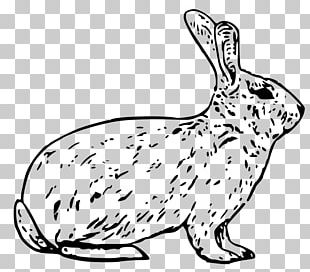 Snowshoe Hare Arctic Hare Rabbit PNG