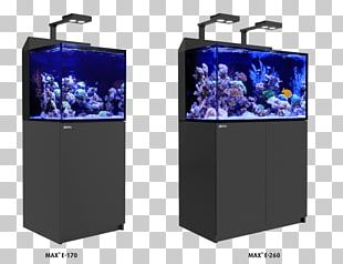 Reef Aquarium Coral Reef Red Sea PNG