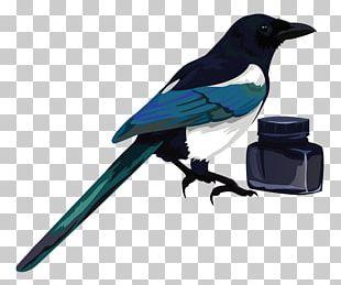 Eurasian Magpie Bird PNG