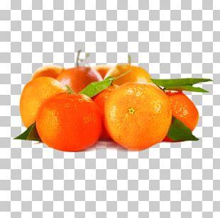 Clementine Tangerine Mandarin Orange Tangelo Blood Orange PNG