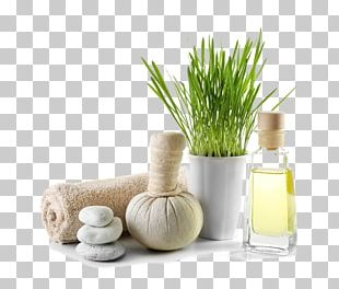 White Bamboo Spa Massage Day Spa Beauty Parlour PNG