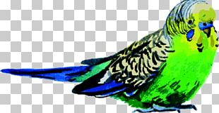 Budgerigar Bird Parrot Watercolor Painting PNG