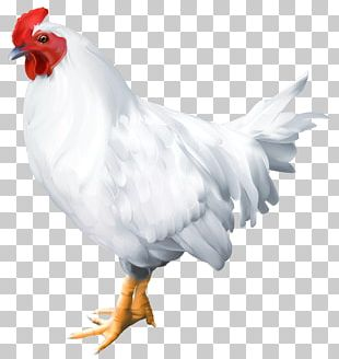 Solid White Bird Rooster Poultry PNG