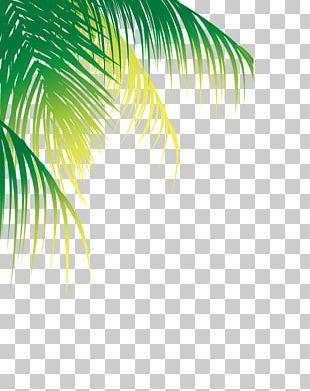 Coconut Water Arecaceae Tree PNG