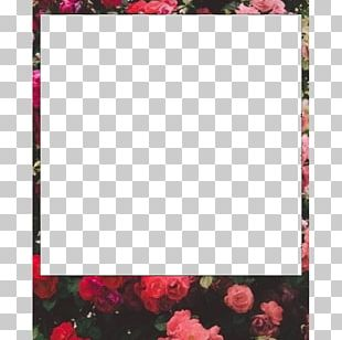 Frames Kodak Photography Polaroid Corporation Pattern PNG