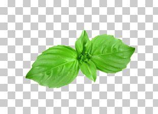 Basil Herb Mint PNG