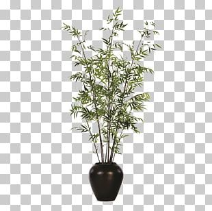Flowerpot Bamboo Houseplant Weeping Fig PNG