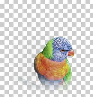 Budgerigar Video Beyond Clarity 4K Resolution High-definition Television PNG