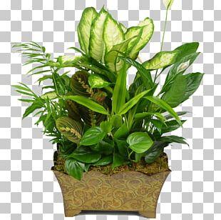 Floristry Flowerpot Houseplant Garden PNG
