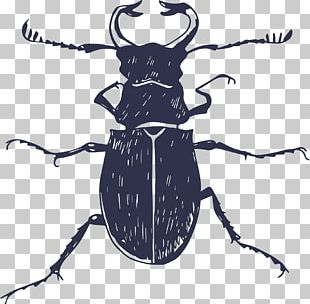 Insect Poster Euclidean PNG