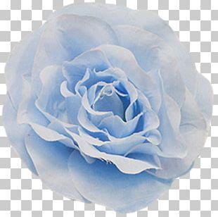 Centifolia Roses Blue Rose Garden Roses Floribunda Petal PNG