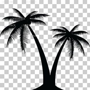 Coconut Graphics Portable Network Graphics Palm Trees PNG