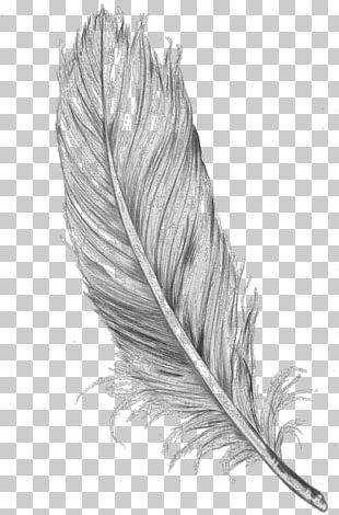 Bird Drawing Feather Line Art PNG
