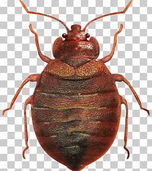 Bed Bug Top View PNG