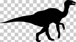 Tyrannosaurus Dinosaur Size Silhouette Spinosaurus PNG