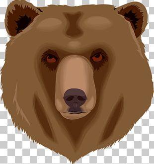 Brown Bear Giant Panda Polar Bear Cubs PNG