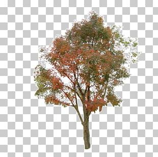 Tree Information PNG