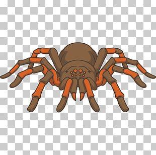 Drawing Tarantula PNG