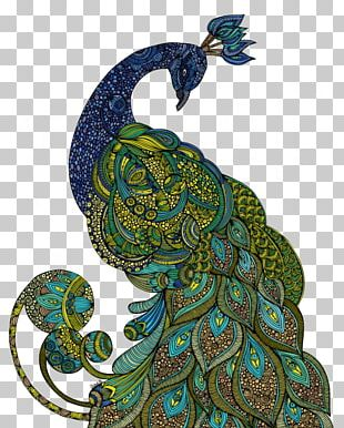 Asiatic Peafowl Drawing Printmaking Illustration PNG