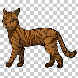 Cats Of The Clans Warriors Whiskers Birchfall PNG