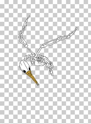 Bird Drawing Clothing Accessories Beak PNG