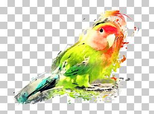 Budgerigar Lovebird Watercolor Painting Art PNG