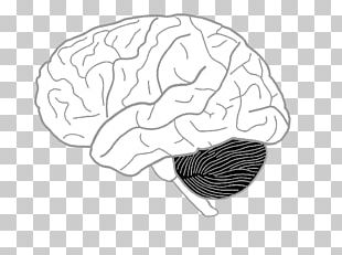 Drawing On The Right Side Of The Brain Coloring Book Human Brain Human Body PNG