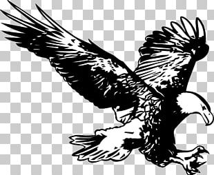 Bald Eagle Drawing Line Art PNG